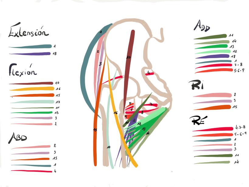Anatomía – InvestigaFisio